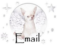 Email Animal Haus